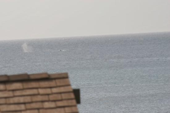 เมาอิ, ฮาวาย: Whale