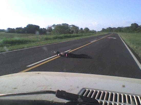 Corrientes, อาร์เจนตินา: eso mientras iba en el auto :)