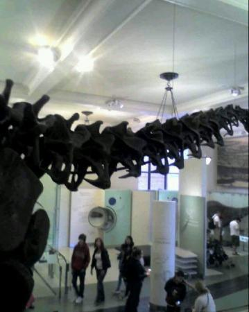 American Museum of Natural History: Debbie sees dinosaurs!