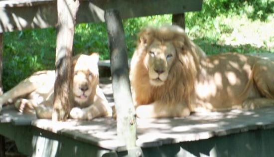 Cincinnati Zoo & Botanical Garden ภาพถ่าย