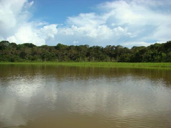 Leticia, โคลอมเบีย: La isla de los micos - mar 23 en el lago mariyu