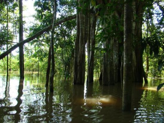 Leticia, โคลอมเบีย: La isla de los micos - mar 23