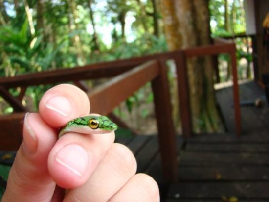 Leticia, โคลอมเบีย: La isla de los micos - mar 23 una culebrita casadora