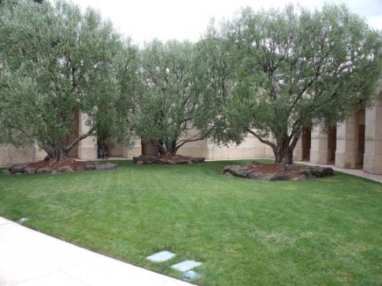 นาปา, แคลิฟอร์เนีย: Missionary Olive Trees -- Opus One Winery