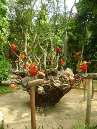 Xcaret Eco Theme Park ภาพถ่าย