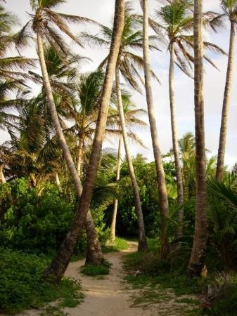 Path to the East side of Little Corn Island