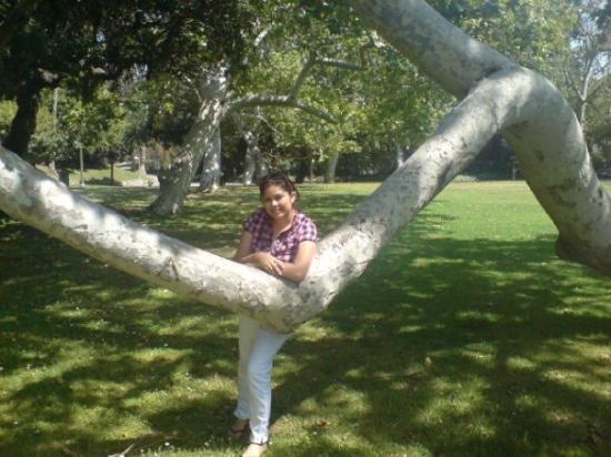 ฮอลลีวูด, ฟลอริด้า: en un jardin de Beverly Hills