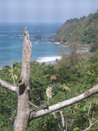 อุทยานแห่งชาติ Manuel Antonio National Park, คอสตาริกา: See the Iguana in the tree? (Pacific Side)