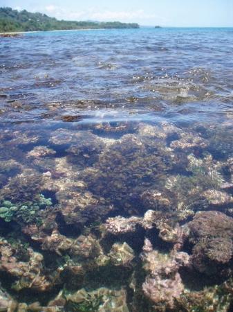 ปวยร์โตไวโจ, คอสตาริกา: Reef @ Playa Chiquita