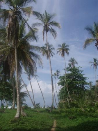 ปวยร์โตไวโจ, คอสตาริกา: Path to Playa Chiquita, C.R. (Caribbean side)