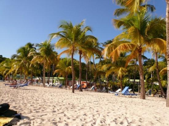 Sainte-Anne, กวาเดอลูป: plage de ste Anne