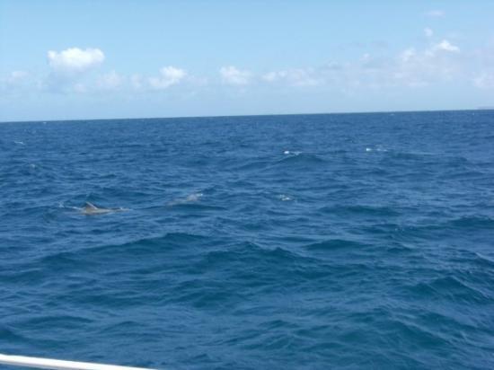 Sainte-Anne, กวาเดอลูป: les dauphins de petite terre