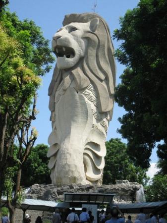 สิงโตทะเล เซ็นโตซ่า ภาพถ่าย