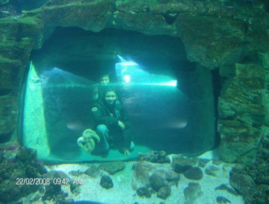 Aquarium La Rochelle: EN EL ACUARIO DE LA ROCHELLE