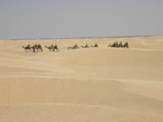 เกาะเจอร์บา, ตูนิเซีย: Alle porte del deserto del Sahara - agosto 2007