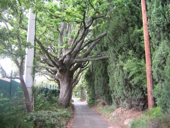 แอ็ซซองโปรวองซ์, ฝรั่งเศส: ce petit chemin est tellement étroite que si vous rencontrez une voiture vous avez le choix soit