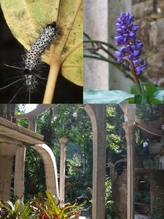 Xilitla, เม็กซิโก: ESTAS FOTOS FUERON TOMADAS: GUSANO: PACO  FLOR: YO  Y EL OTRO NO SE JAJA
