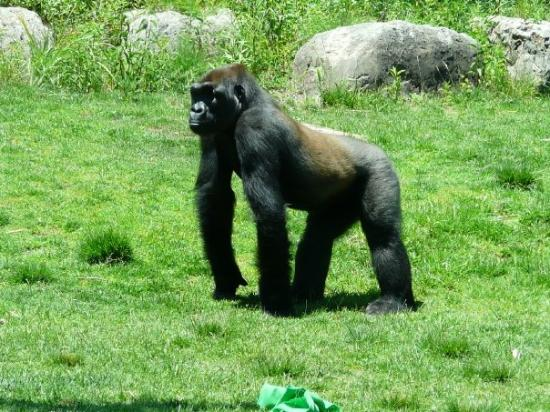 Sedgwick County Zoo: Where's the chow?