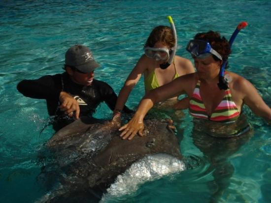 ปาเปเอเต, เฟรนช์โปลินีเซีย: Raies et requins