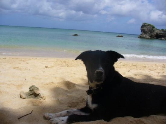 โอะกินะวะ, ญี่ปุ่น: Sara loves the beach!