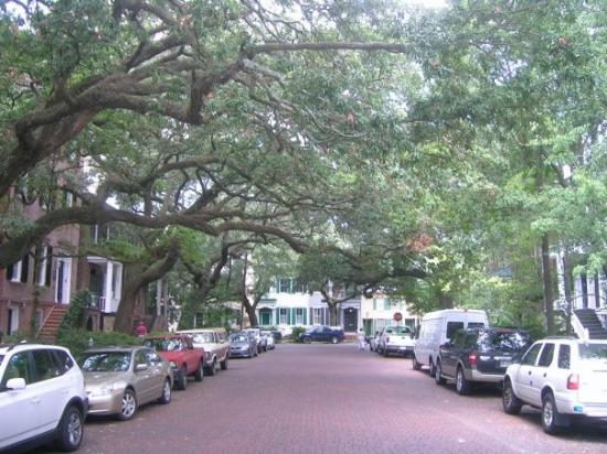 สะวันนา, จอร์เจีย: The neighborhoods of Old Savannah are really picturesque. Look at the sweeping arms of the oaks!