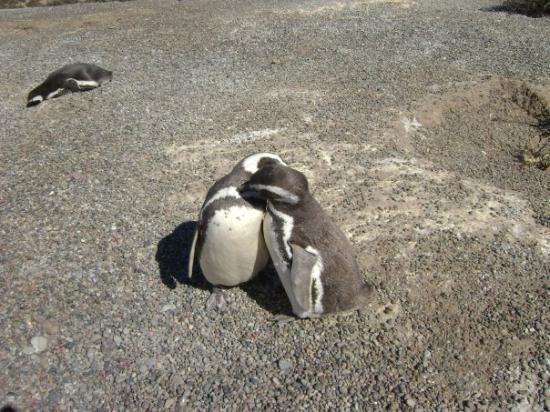 Puerto Madryn ภาพถ่าย