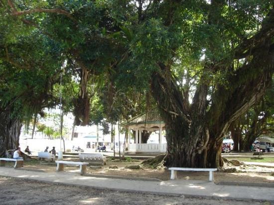 Bocas Town ภาพถ่าย