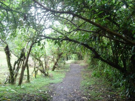 Monteverde ภาพถ่าย
