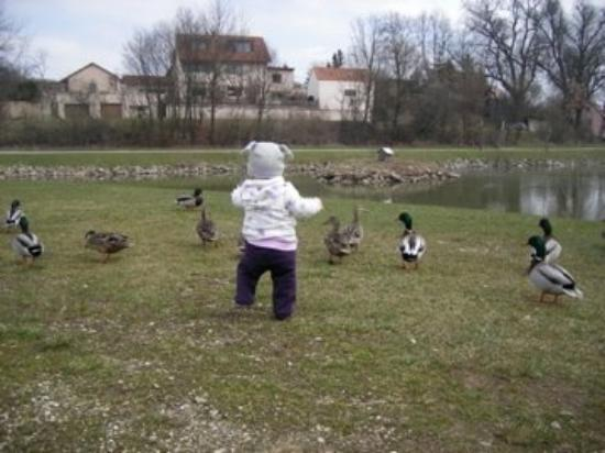 Wolframs-Eschenbach, เยอรมนี: Feeding the ducks? Nah, just annoying them...