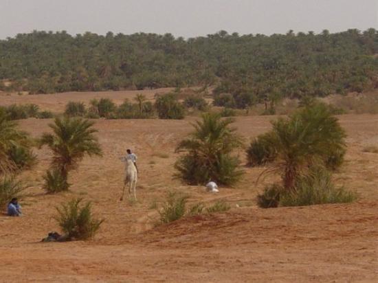 Timimoun, แอลจีเรีย: la palmeraie