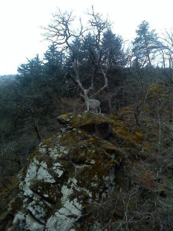 Borjomi-Kharagauli National Park, จอร์เจีย: Borjomi, melek geyik