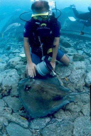 คูราเซา: Curacao, Caribbean