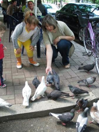 ติรานา, แอลเบเนีย: Гълъби в Тирана.