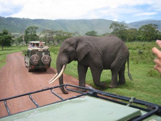 Serengeti National Park, แทนซาเนีย: Eliphants allways get to go first:-)
