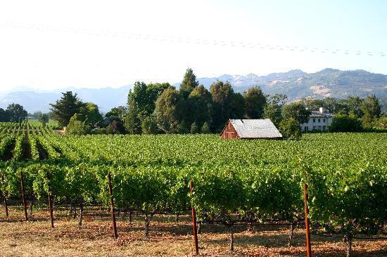 Holiday Inn Express & Suites Napa Valley - American Canyon: Typical Napa vineyard