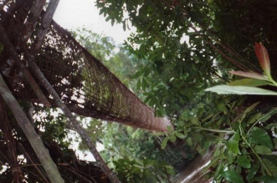 Franceville, กาบอง: vue de dessous