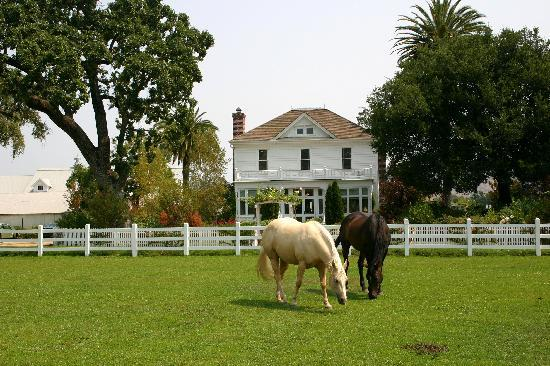 Holiday Inn Express & Suites Napa Valley - American Canyon: Grazing horses in front of Nickel & Nickel