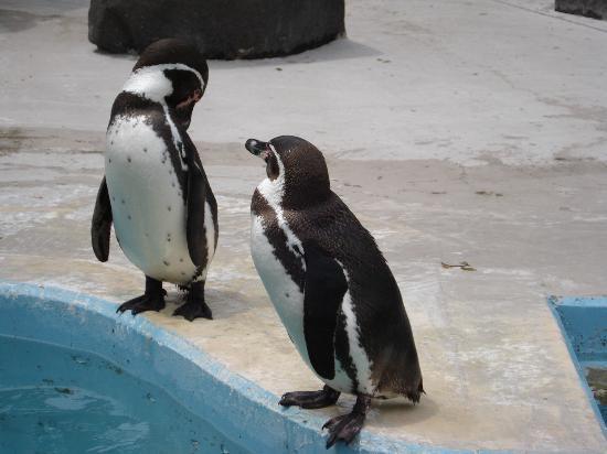 Omoriyama Zoo: ペンギンのまんまタイムは本当に可愛い!