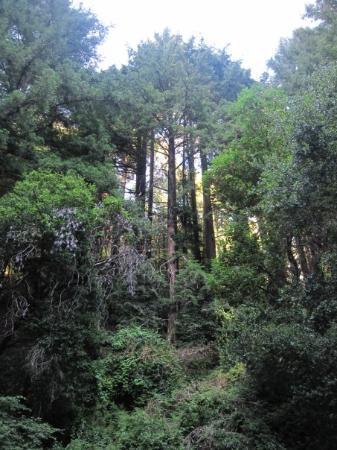 ซานตาครูซ, แคลิฟอร์เนีย: Redwood forest