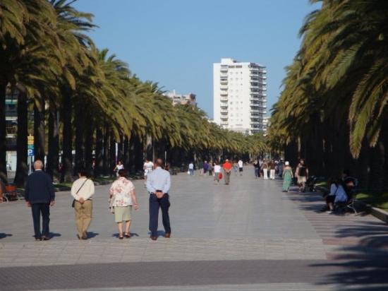 ซาลู, สเปน: Taragone