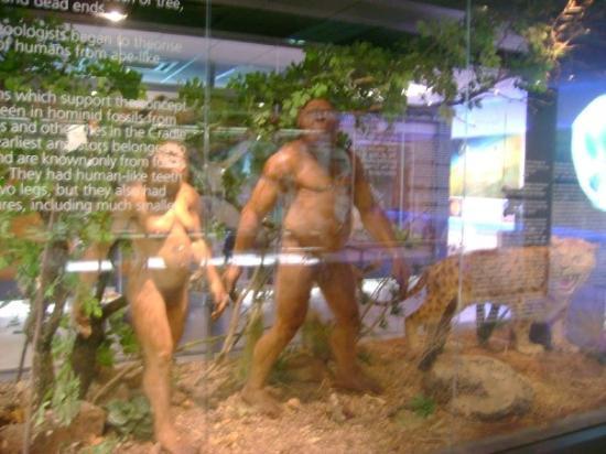 โจฮันเนสเบิร์ก, แอฟริกาใต้: models of what we looked like millions of years ago