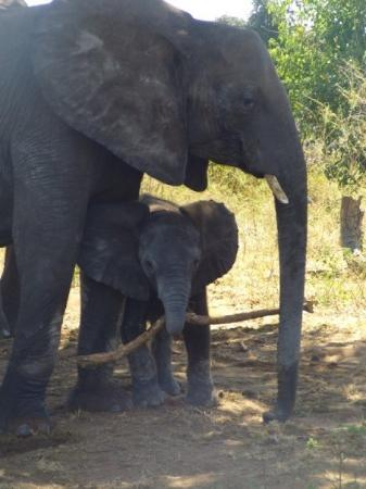 Chobe National Park, บอตสวานา: Botswana - Chobe Nationalpark
