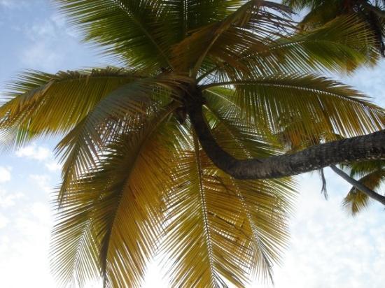 มาร์ตินีก: La Martinique, couchée sur la plage :)
