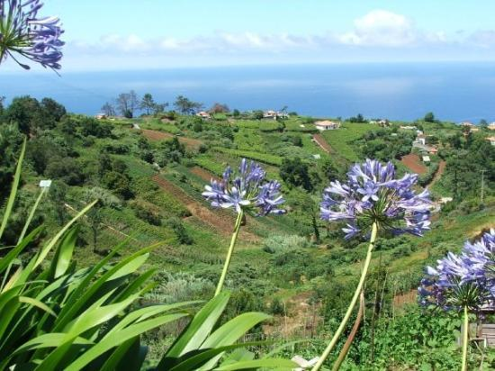 Panoramica de Madeira