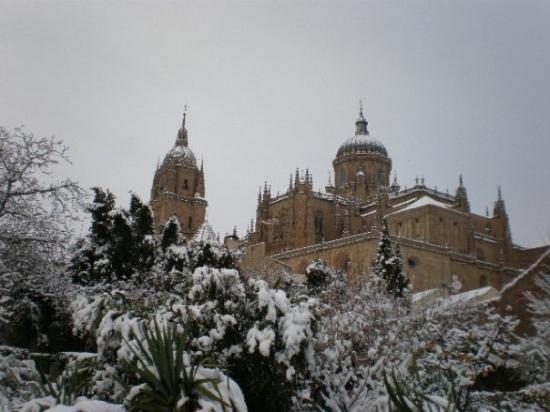 Old Cathedral (Catedral Vieja): Catedral Salamanca, jardín de Calixto y Melibea.