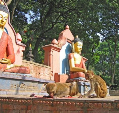 กาฐมาณฑุ ภาพถ่าย