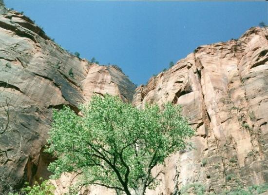 Zion National Park ภาพถ่าย