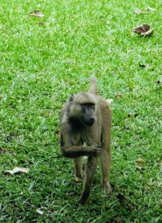 เขตอนุรักษ์แห่งชาติมาไซมารา ภาพถ่าย