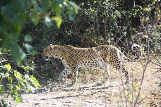 Chobe National Park, บอตสวานา: Chobe