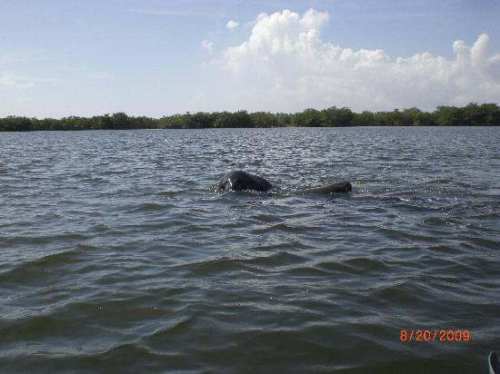 Fin Expeditions: Manatees Ahoy!